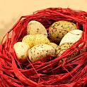 Het Rode Nest